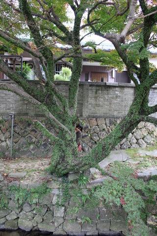 20101123-03.JPG